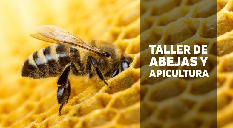 Taller de introducción a las abejas y apicultura